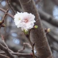 年の瀬 ~12月の花と鳥~