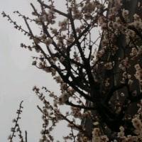 春を実感しました