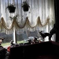 窓際でひなたぼっこ・・の毎日。