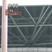 東京に雪が降りました
