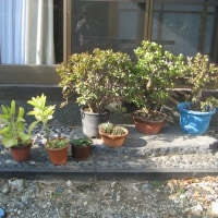 植木の冬支度