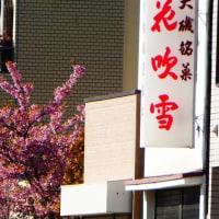 『河津桜』 花吹雪