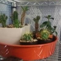 サボタニ観葉植物