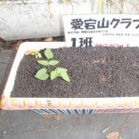 H28年度 愛宕山クラブ めざせ!!プラントマスター  観察日記10月12日