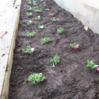 花壇の整備