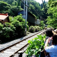 「江ノ電とあじさいのコラボ」一瞬撮!!