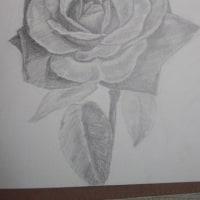 薔薇デッサン