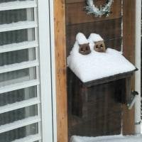 雪やこんこん、犬は