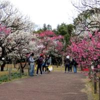 メモ帳708ページ目 梅園で春の香りに浸る