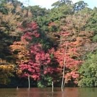 今日の亀山 2016/11/29(火)