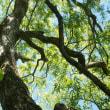 裏磐梯の樹々と遊ぶ(Ⅷ)