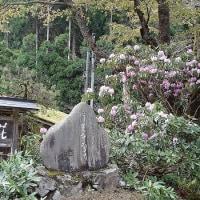 京都市左京区・花脊地区の新緑・2017.5.4