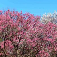 立春の昭和記念公園