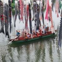 川上峡の鯉のぼり その9