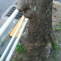 不思議な街路樹