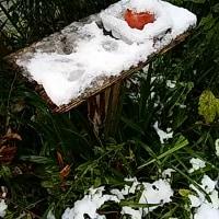 11月に木枯らし1号…