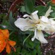 小野なな nanaono. NANAONO     ドライ植物