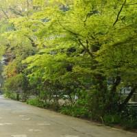 4月のカバー画像「妙本寺」