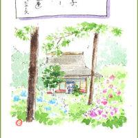 鎌倉・明月院(あじさい寺)