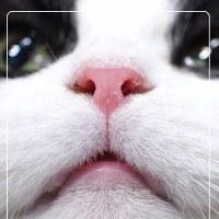ピンクの鼻