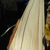 薪ストーブの焚き付けは赤松なのだ。