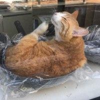 横浜イセザキモール6丁目、西沢金物店の「ネコ鍋招き猫」再び!
