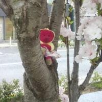 日刊くゆっぺ~木登り上手、だよね?~