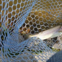Fish  On  王禅寺 3月29日