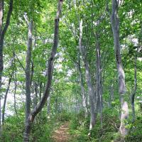 林道散歩四