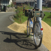 裏道から農道へ