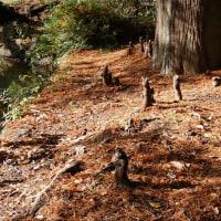 落羽松の根っこ・・・・井の頭公園 ( 11月 )