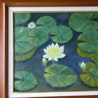 睡蓮、白い花(Fー6)