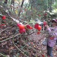 11月20日(日)なるほど自然講座「岩舟渓谷と松尾池を歩こう!」