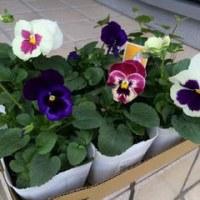 季節の花を買っていました