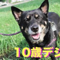 紫陽花は熟女犬の季節♪