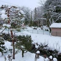 全国的な、今年最強寒波「今朝10cm新雪」。