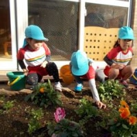 花壇の掃除