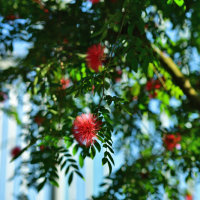 新宿御苑温室 紅白 D5 AF-S NIKKOR85mmf1.8 G