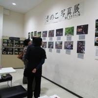 佐賀きのこ会、写真展を開催しています。