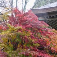 滋賀県湖北地方へ 雨をついての紅葉狩り