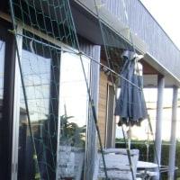 ゴーヤの日よけの網棚をセットしました