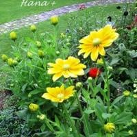 梅雨時に咲く 爽やかな花