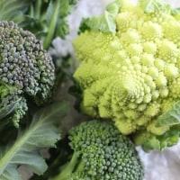 1月<4>アブラナ科の野菜