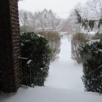 雪かきと猫のしあわせと