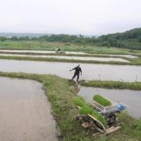 宝篋山の麓で、棚田の田植え作業。