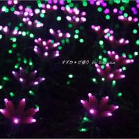 光の花咲く森