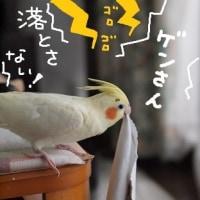 雷記念日(6月26日)
