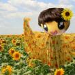 仙台市長に黄色いヒマワリ咲く