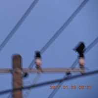 1/23 カーコたちが2羽で来ていた