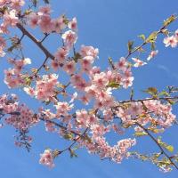 ビーンズのバケツ型小物入れと早咲きの桜と千羽鶴